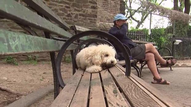 [NY] Dog Flu Cases Up in NYC