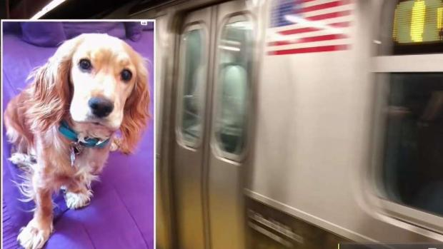 [NY] Dog Missing In Subway After Running Onto Midtown Tracks