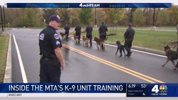 [NY] How These Playful Pups Train to Become Part of Elite Anti-Terror Unit in NYC