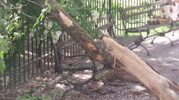 [NY] Fallen Trees in NYC Parks Injure 2 Women in Past 2 Days