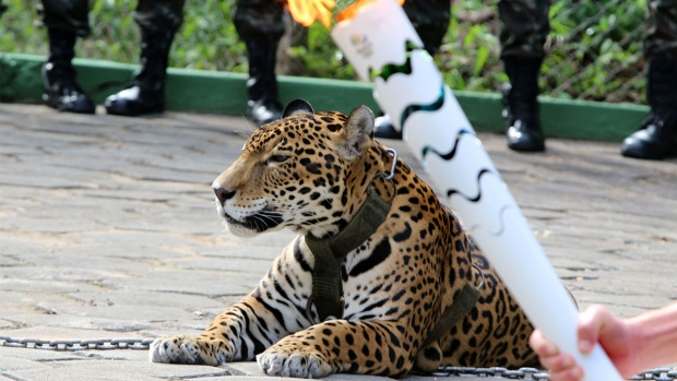 Rio Olympic Torch Travels Around the World