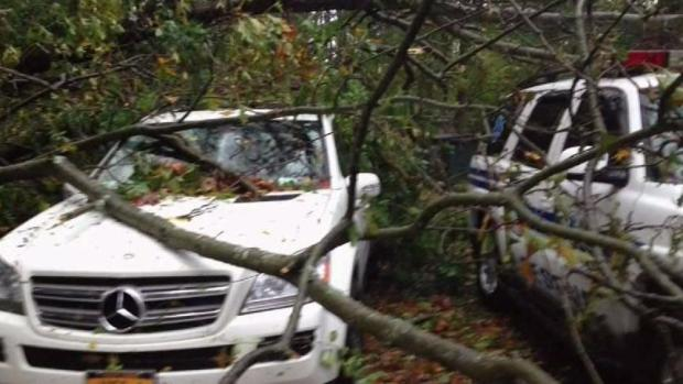 [NY] Man Hit With Fines After Cutting Trees After Sandy