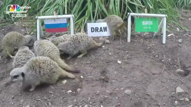 [NATL] Mystic Meerkats Predict World Cup Outcomes