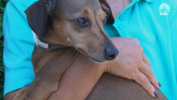 [DFW] Dog Missing Two Years Finds Way Back to Owner
