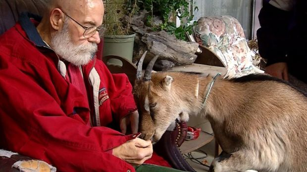 [NATL-DFW] Service Goat Gets Stamp of Approval for Man With Parkinson's
