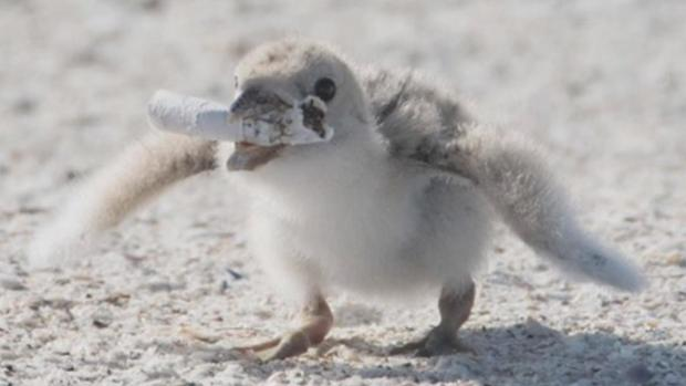 Photos of Bird With Cigarette in Its Mouth Spark Outrage