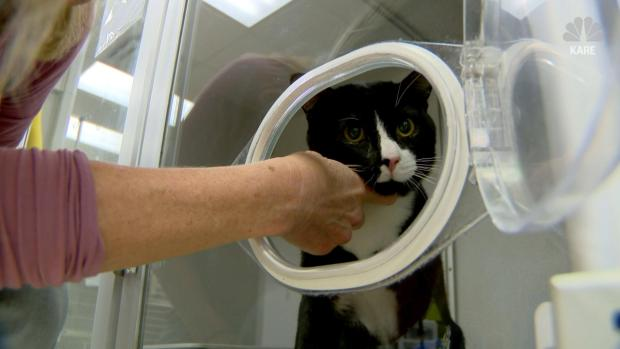 [NATL-DFW] Cat Survives 45-Minute Washing Machine Cycle