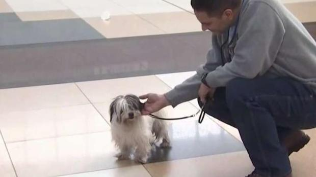 NJ Transit Engineer Rescues Dog From Tracks