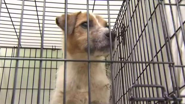 [NY] Nearly 200 Dogs Rescued From NJ Nightmare