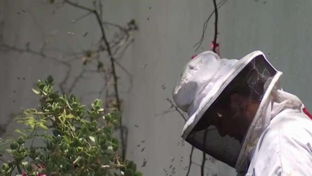 [NATL LA] OC Woman Stung Hundreds of Times by Massive Bee Swarm