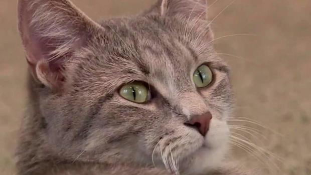 'Office Cats' Work Toward Forever Homes