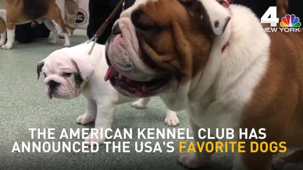 [NY] Meet America's Most Popular Dog Breeds