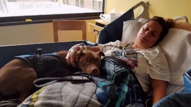 [NY] Patient Says NJ Hospital Booted Service Dog