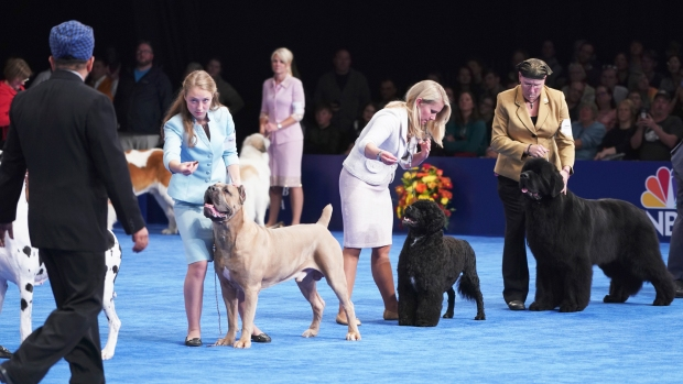 [NATL-PHI] Meet the Stars of the 2018 National Dog Show