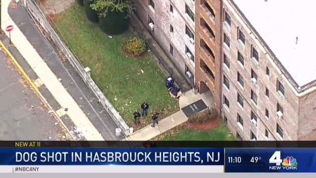 [NY] Police in New Jersey Shoot Dog After Attack