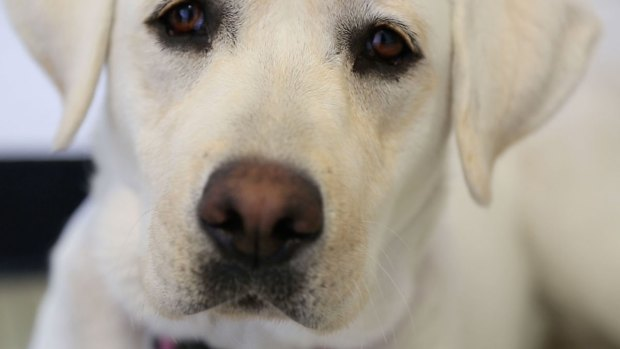 How One Dog Helped a Veteran in Pain