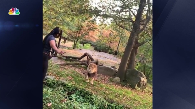 Woman Climbs Into Exhibit at Bronx Zoo, Taunts Lion
