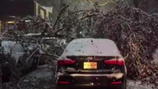 [NY] Season's First Snowstorm Topples Trees All Around NYC