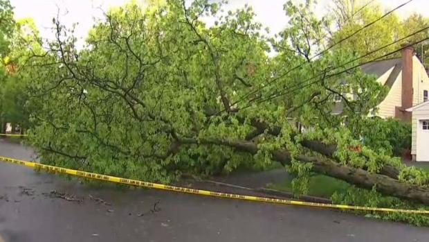 Severe Weather Downs Trees in New Jersey, Knocks Out Power