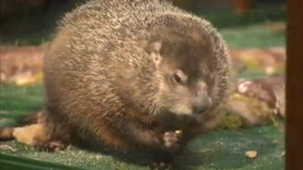 [NY] WATCH: Staten Island Chuck Predicts Early Spring