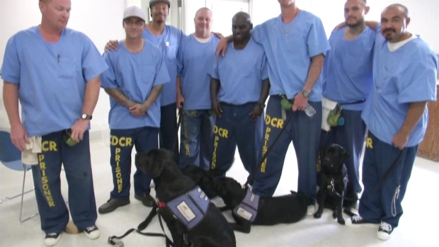 [NATL-SD]Prison Inmates Training Service Dogs to Make a Difference