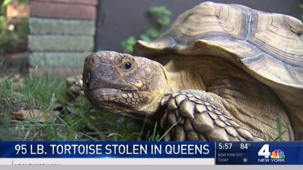 [NY] Tortoise Stolen From Environmental Center