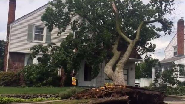 Tree Crashes Into House While Man Sleeps
