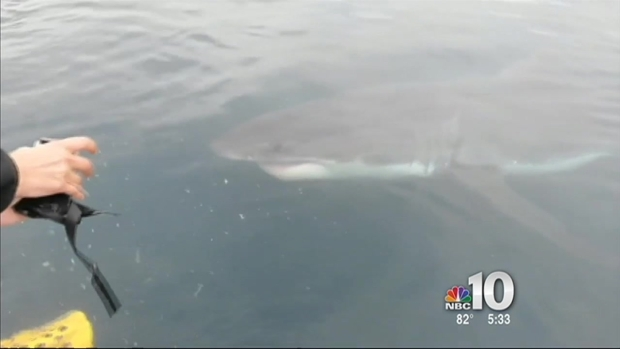 [PHI] Great White Shark Off Jersey Shore