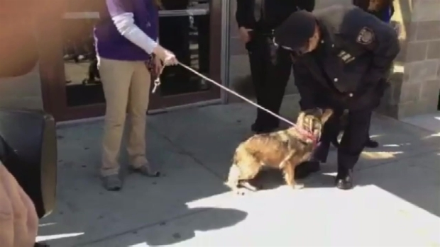 [NY] Dog That Raced Alongside Metro-North Train Meets Rescuers