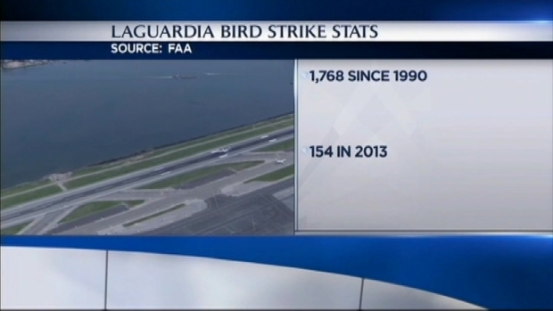 [NY] United Flight Lands Safely at LaGuardia After Bird Strike