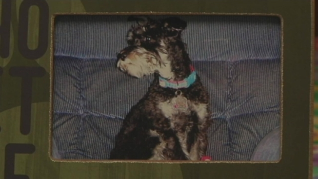 [NY] Family Pup Stolen From New Jersey Home