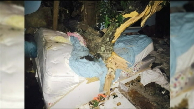 [NY] 5,000-Pound Tree Impales Home, Traps Sleeping Woman in Bed