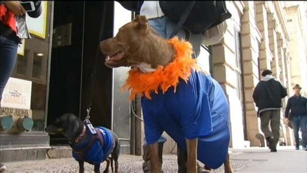 [NY] Puppies in Mets Gear Parade in Manhattan