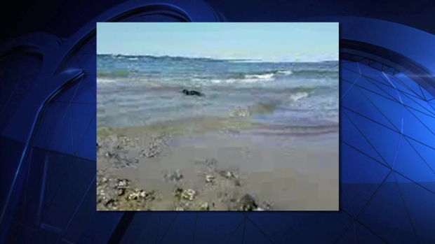 [NY] SEAL RELEASE VIDEO