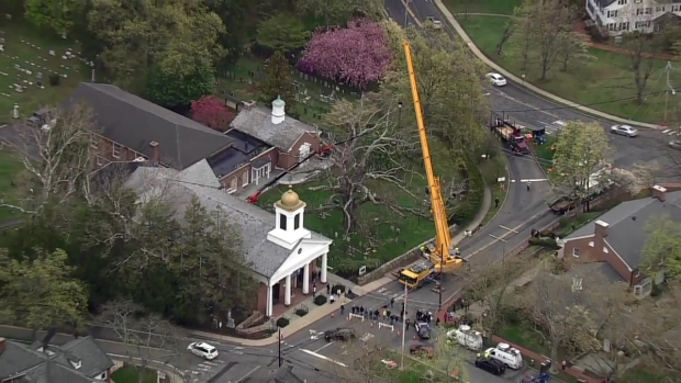 [NY] 600-Year-Old Tree in NJ, One of Oldest in Nation, Taken Down Monday