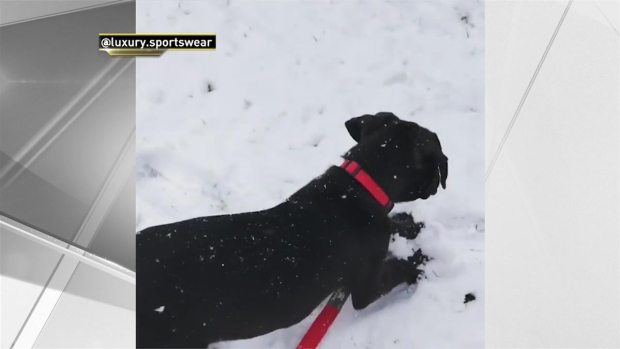 Rescue Dog's First Time Seeing Snow...and It's Confusing