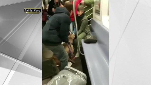 [NY] Dog Attacks Woman on Subway