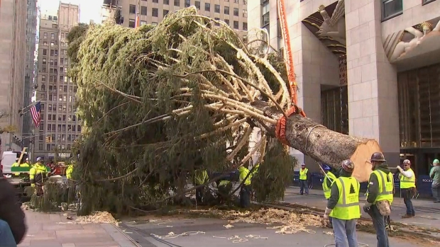 [NY] See it: Crane Lifts 2019 Rockefeller Center Tree Into Place