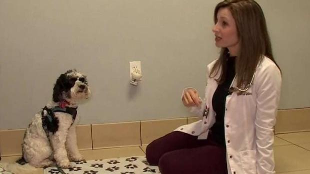 When Your Pets Need Therapy