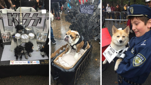 [NATL-NY] Pooches Sniff Out Best Costume Title in Pet Parade