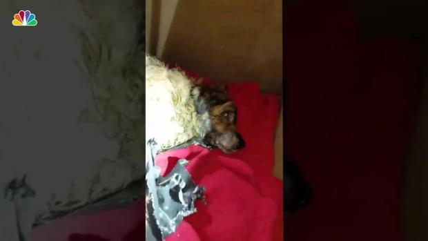 [NY] Dog Rescued After Being Found Wrapped in Bag