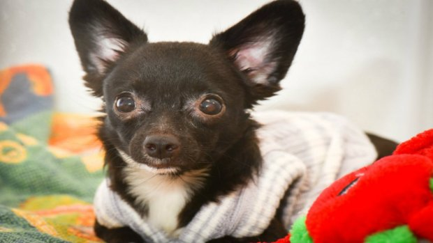 Puppies Rescued From NJ Hoarder Adopted