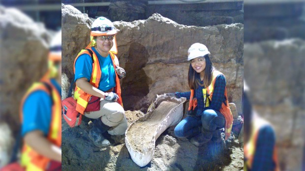 [NATL-LA] Fossils Unearthed During Metro Purple Line Construction