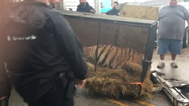[NATL-DFW] Pot Smokers Find Caged Tiger in Abandoned Houston House