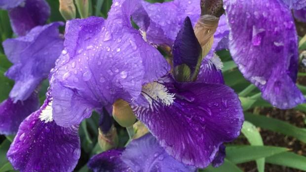Your Spectacular Spring Photos