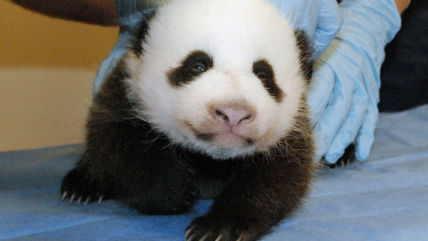 [NATL-DC] PHOTOS: Our 10 Favorite, Fabulously Adorable Bao Bao Moments
