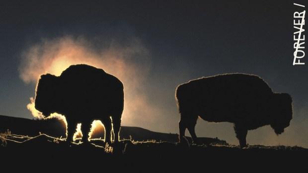 [NATL] New Stamps Celebrate National Park Service's Centennial