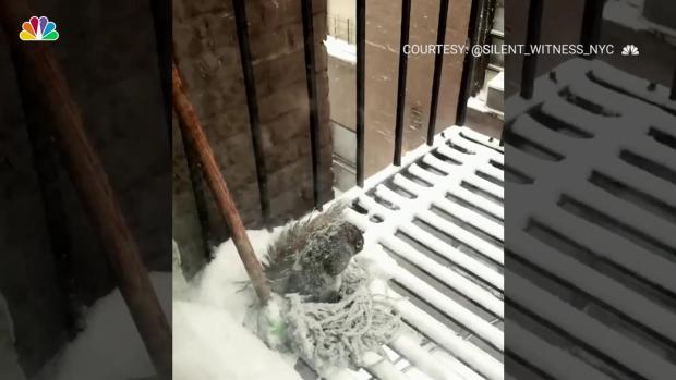 Freezing Squirrel Shelters From Snowstorm in Old Mop