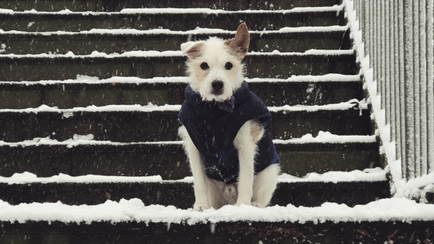 Your Photos: Dogs, Kids and More in the Snow