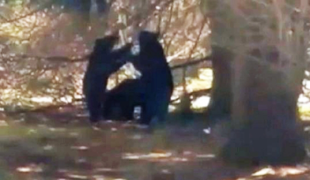 [NY] RAW: Bears Wander Through NJ Yard, Eat From Birdfeeder